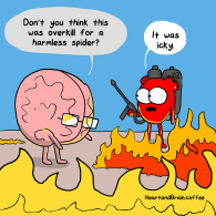 brain and heart 0714_spider